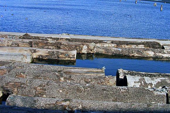 川辺久造の画像 p1_11